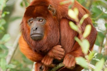 Aventura de 3 días en la selva amazónica en Hacienda Concepción