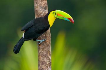 Aventura de 3 días en la selva amazónica en Posada Amazonas