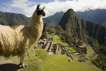 Excursão guiada para Machu Picchu...