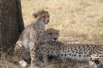 Serengeti Safari - Tanzania