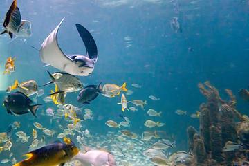 Day Trip Aquarium Encounters Tour near Key Largo, Florida
