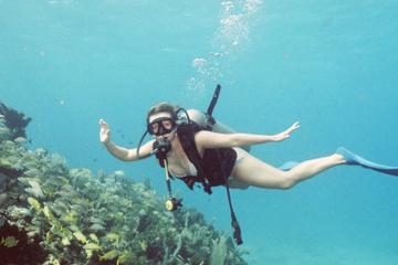 Excursion d'une journée de plongée à...