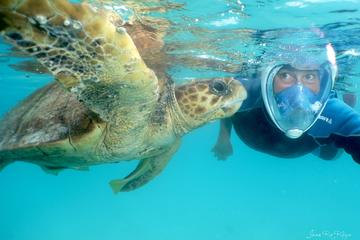 Signal Island Turtle Tour from Noumea