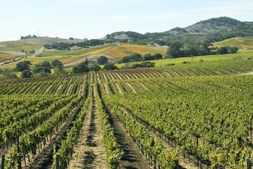 Recorrido vinícola privado en el Valle de Casablanca: Bodegas Casas...