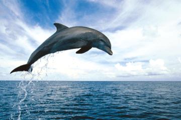 Croisière d'observation des dauphins incluant plongée avec masque et...
