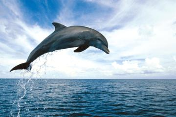 Key West Dolphin Watch en snorkelcruise