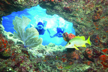Key West Living Coral Reef Snorkel Adventure