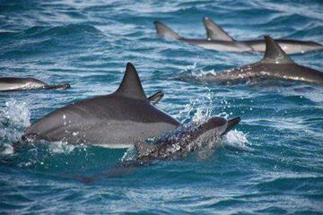 Fiji Dolphin Watch Takalana Bay