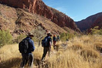5-Day Larapinta Trail Walking Tour from Alice Springs