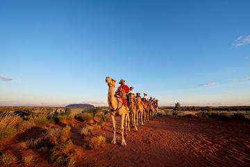 Tour Uluru Camel Express all'alba o