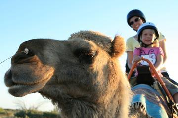 Uluru Camel Express, tours bij zonsop- of ondergang