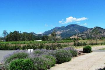 Calistoga Wine Country Sip 'n' Cycle Bike Tour
