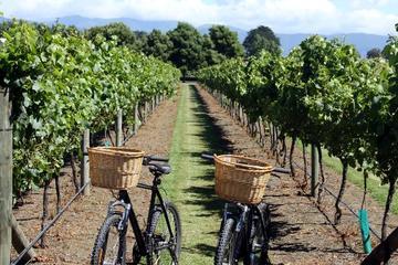 Recorrido en bicicleta eléctrica de medio día por el viñedo con cata...