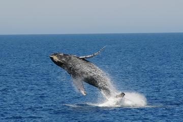 Bootsfahrt mit Walbeobachtung und Fremantle-Tagesausflug von Perth