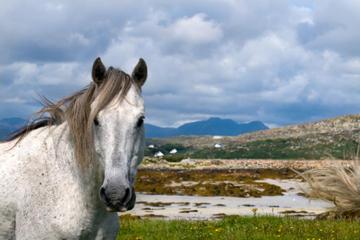 Viagem de um dia para as cidades de Connemara e Galway saindo de...