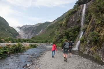 Franz Josef Glacier Valley Eco Tour