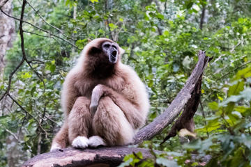 Monkeyland Guided Tour in Plettenberg...