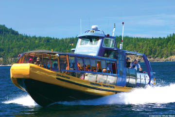 Day Trip Whale-Watching Tour from Vancouver near Vancouver, Canada