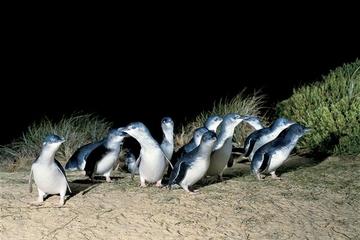 2-Tägiger Ausflug entlang der Great Ocean Road, Mornington Peninsula...