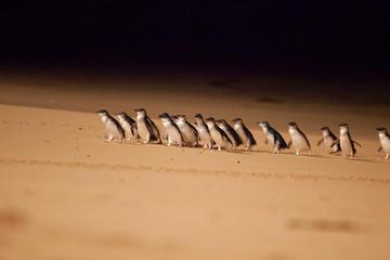 Excursion de 2 jours à Phillip Island Beach et découverte de la faune...