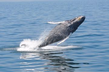 Day Trip Whale Watch from Plymouth near Plymouth, Massachusetts