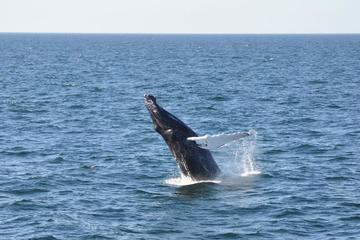 Day Trip Whale Watch from Provincetown near Plymouth, Massachusetts