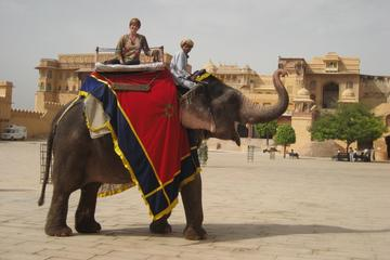 Private Tour: Amber Fort and Jal...
