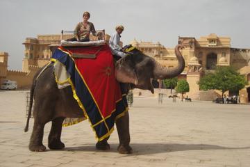 Visite privée: Fort d'Amber et Jal Mahal, avec promenade à dos...