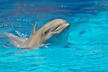 Encuentro con delfines y almuerzo en el Parque Nacional Chankanaab de...