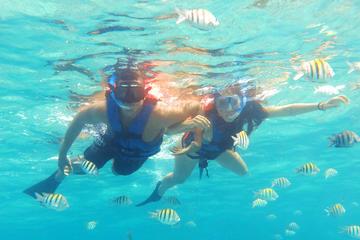 Reef Snorkel Plus