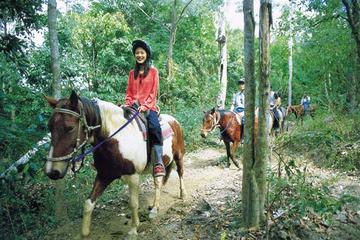 Passeio de cavalo saindo de Cairns