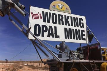 Tom's Working Opal Mine: Guided Tours