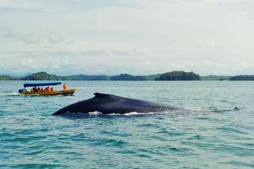 Whale Watching and Island Tour in the...