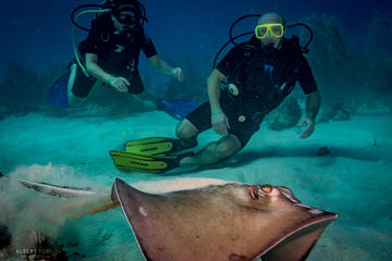 Afternoon & Night Dive in Bayahibe from Punta Cana -Small group in Caribbean Sea