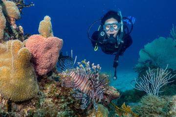 Bayahibe 3 Tank Diving with Lunch from Punta Cana (Small Group VIP Diving)