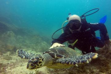Scuba Diving Tour in Arraial do Cabo