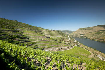 Douro Valley and Wine Day Trip from Porto with Cruise and Optional...