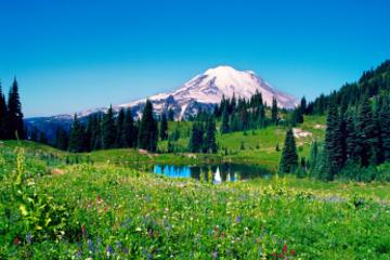 Excursão diurna ao Mt Rainier saindo...