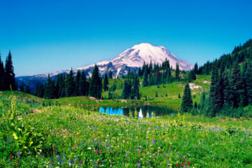 Tour giornaliero di Mt Rainier da Seattle