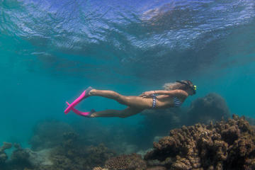 Exclusive Ningaloo Adventure Charter from Exmouth