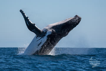 Humpback Whale Watching and Lagoon...