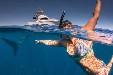 Private Ningaloo Adventure Charters...