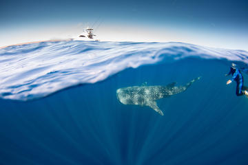 Swim with Whale Sharks Adventure Day from Exmouth