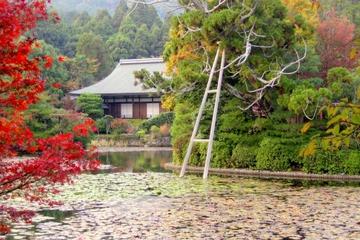 Privater, von Gelehrtem geleiteter Spaziergang durch Kyoto...