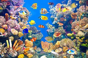 Valencia Shore Excursion: Valencia Hop-On-Hop-Off Tour with Optional Oceanographic Aquarium Ticket