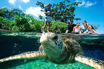 Eintrittsgeld für das Palma Aquarium mit Transfer
