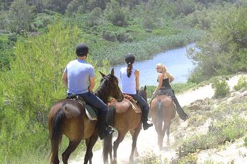 Recorrido nocturno en Mallorca: paseo a caballo, cena y baile