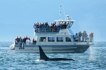 Crucero de avistamiento de ballenas con expertos naturalistas