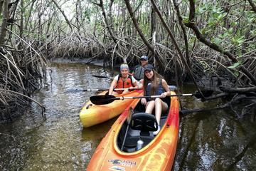 Day Trip Mangrove Tunnels and Manatees Tour near Naples, Florida