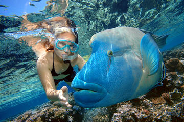 Cairns 2-Day Combo: Great Barrier Reef Cruise and Kuranda Day Trip